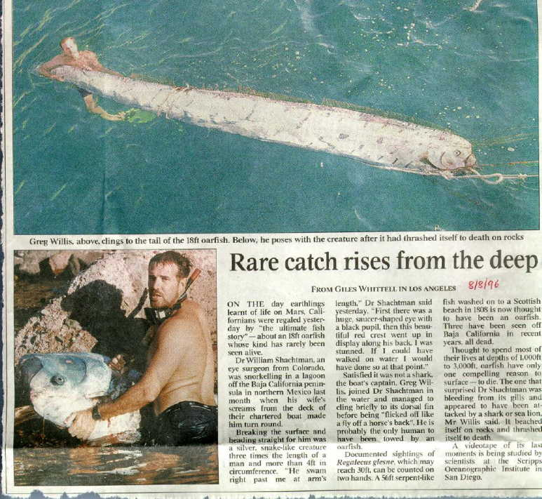 OAR FISH; REAL SEA MONSTER FISH